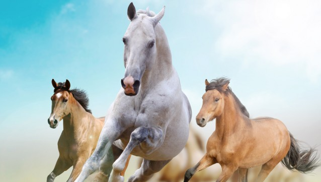 Three unusual facts about horses